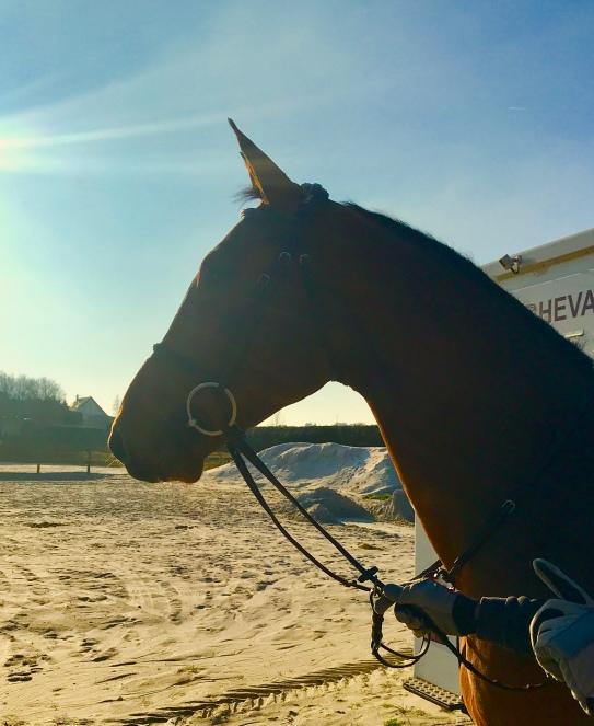 EASTWOOD_D_HORSET