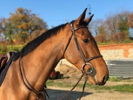 EASTWOOD_D_HORSET2