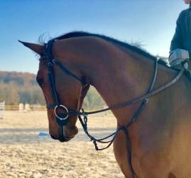 EASTWOOD_D_HORSET4